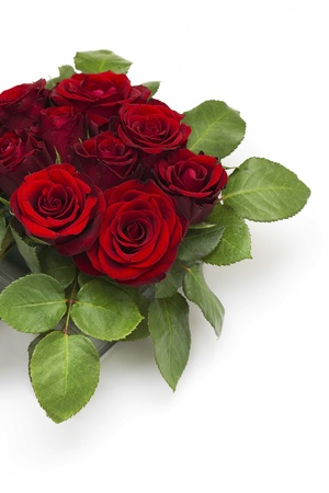 red roses Stock Photo - 13106019