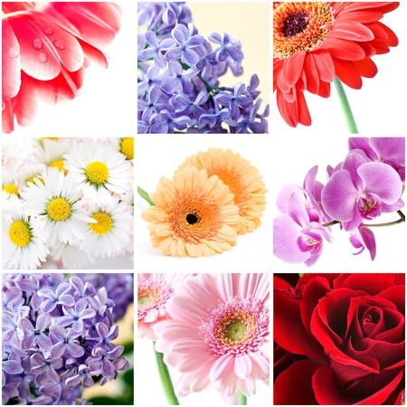 beautiful flowers collage Standard-Bild