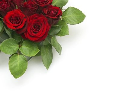 red roses Stock Photo - 13180961