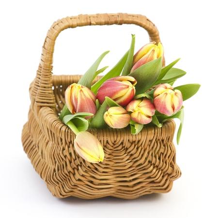 fresh tulips photo