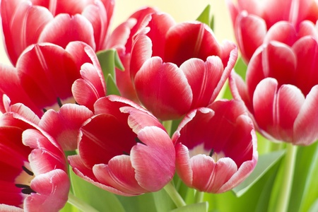 bouquet of fresh tulips photo