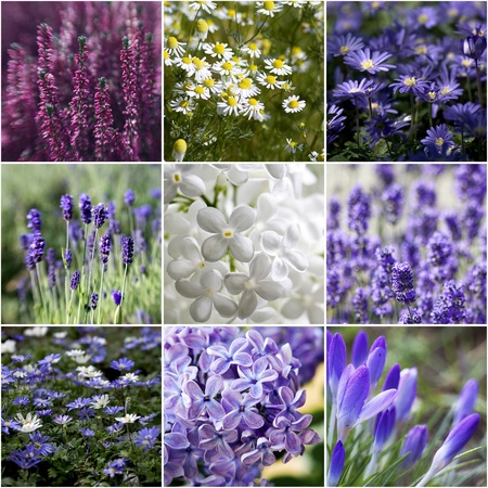 beautiful flowers collage Stock Photo