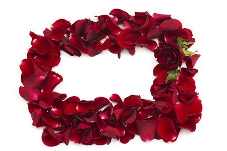 frame of red rose petals photo