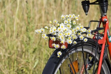 white chamomiles bouquet Stock Photo - 13227733