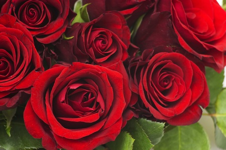 red roses Stock Photo - 13261127