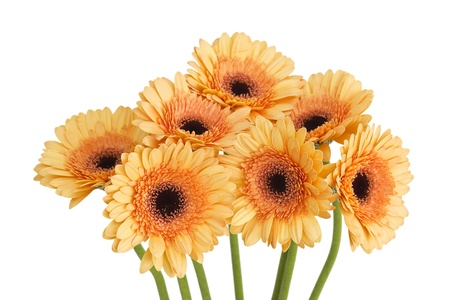 bunch of orange gerbera daisies photo