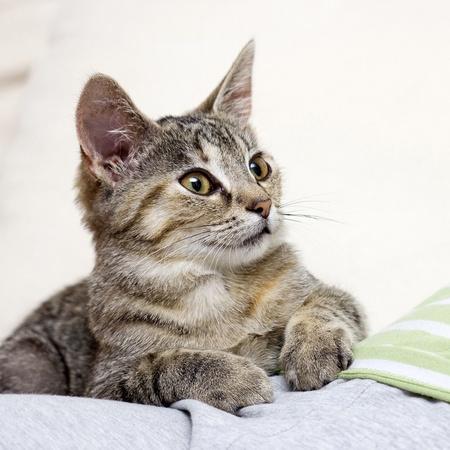 cats playing: little kitten