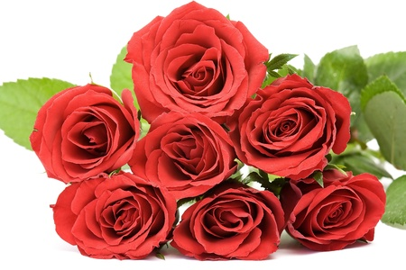 red roses Stock Photo - 13542764