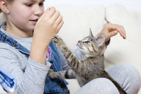 a girl is playing with a kitten Stock Photo - 13547113