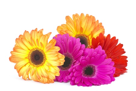 gerbera daisies Stock Photo - 13540082