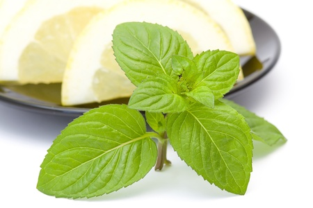 close up of mint leaves photo
