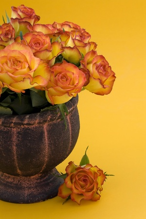 Tea Roses in vase photo