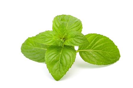 mint leaves isolated on white Stock Photo