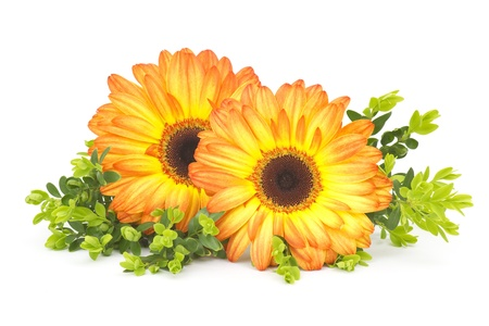 gerbera daisies Stock Photo - 13584317