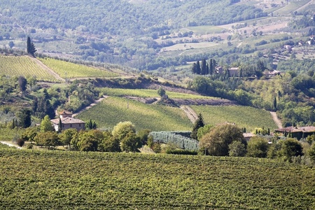 Beautiful vineyard panoramic in Tuscany   photo