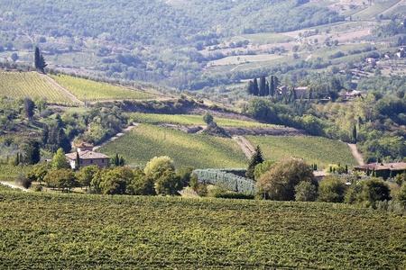 Beautiful vineyard panoramic in Tuscany   photo