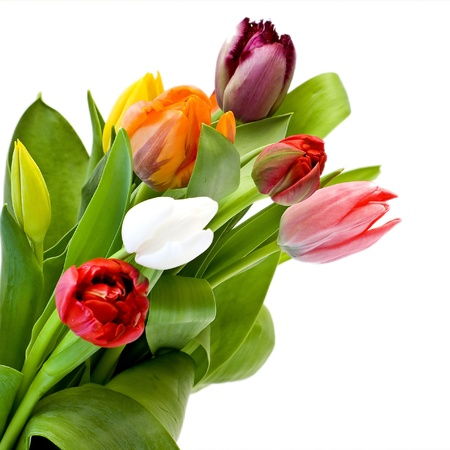 bouquet of the fresh tulips photo