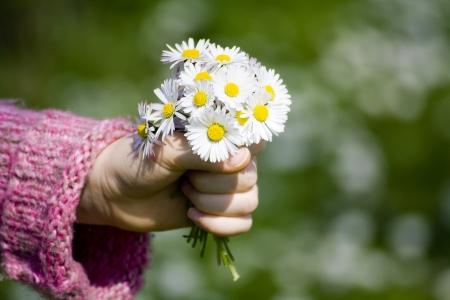Marguerites - Un cadeau pour la mère Banque d'images - 13633213
