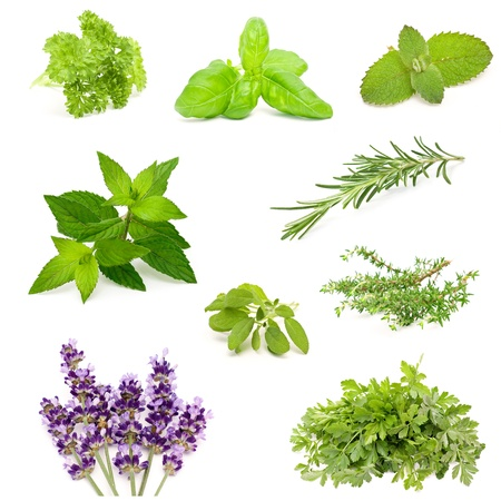 herb collection photo
