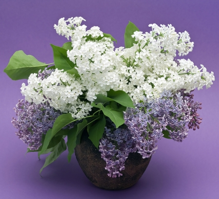 lilac bouquet in a vase photo