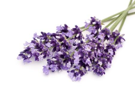 lavender: lavender Stock Photo