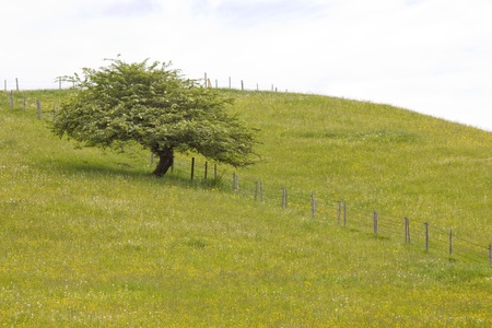 single tree in meadow at spring, Bavaria photo