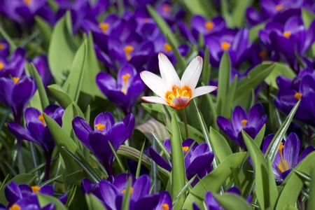Colorful spring flowers in the park photo