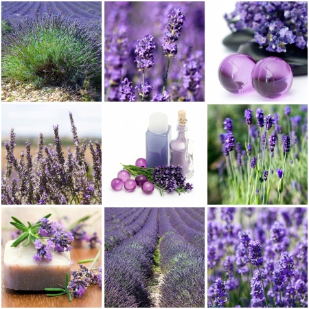 Lavender collage with nine photos  photo