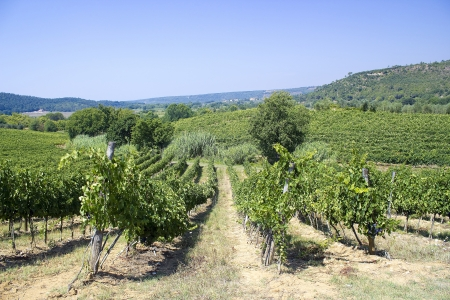 tuscany vineyard photo