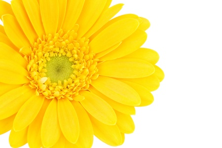 yellow gerbera daisy Stock Photo - 14264994