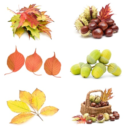 Collage from different autumn leaves, chestnuts and acorns