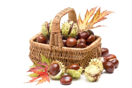 basket full of chestnuts and autumnal leaves Standard-Bild