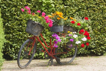 pelargonium: old bicycle equipped with baskets of flowers