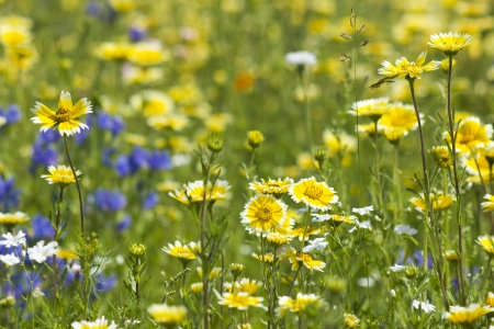 meadow: abundance of blooming wild flowers on the meadow at summertime