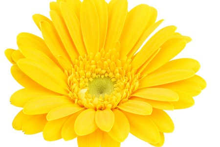 yellow gerbera daisy Stock Photo - 14896971