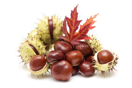chestnuts and autumn leaves photo