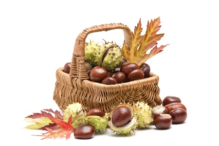 basket full of chestnuts and autumnal leaves photo