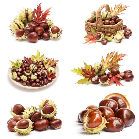 collection of chestnuts and autumnal leaves Standard-Bild