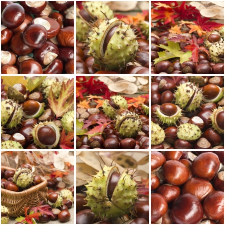 Autumn collage with different pictures photo