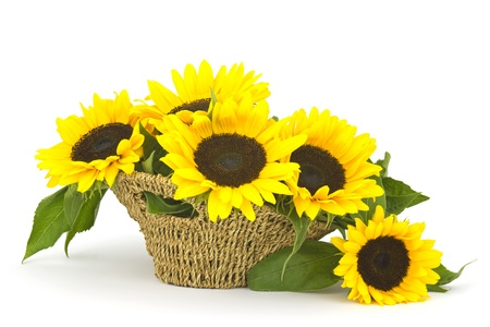 Beautiful sunflower bouquet in a basket photo