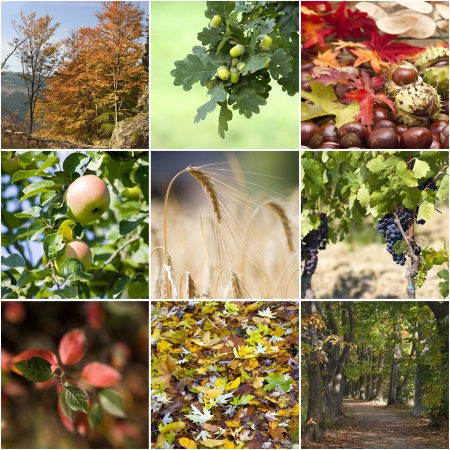 Autumn collage with different autumn pictures  photo