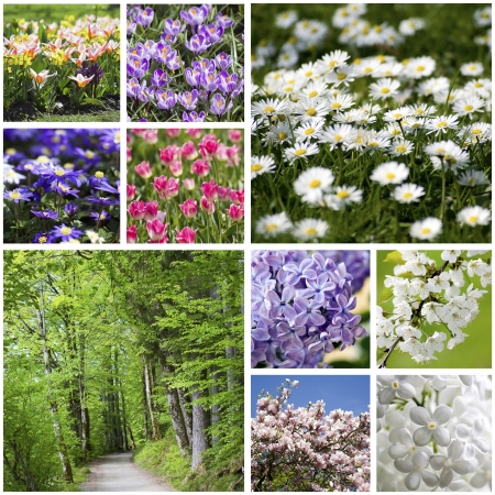 Collage with spring flowers photo