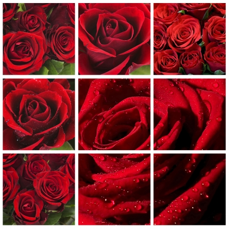 red roses - collage photo