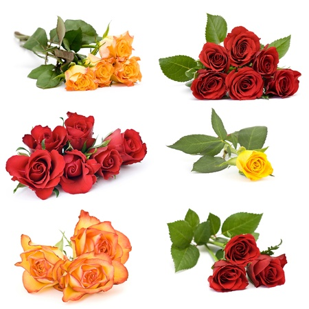 roses on white background - collage photo