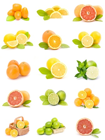 citrus fruit collection photo
