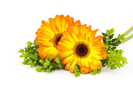 gerbera daisies on white background Stock Photo - 17406895