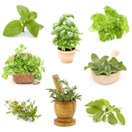 collection of fresh herbs - collage