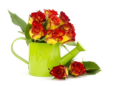 red and yellow roses Stock Photo - 17960395