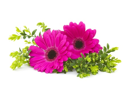 gerbera daisies on white background Stock Photo - 18879536