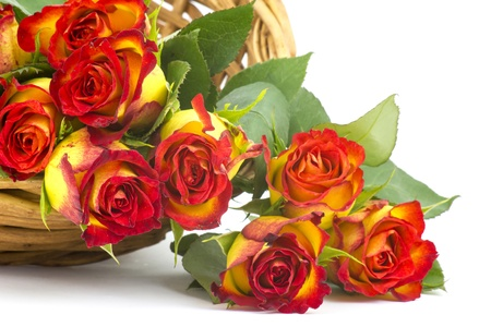red and yellow roses Stock Photo - 18992379